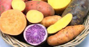 Сладкий картофель (батат) - калории, пищевая ценность и интересные факты